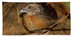 Red-chested Button-quail Bath Towel