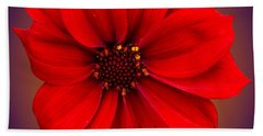 Hand Towel featuring the photograph Red Dahlia-bishop-of-llandaff by Brian Roscorla
