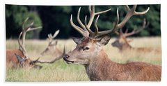 Red Deer Stags Richmond Park Hand Towel