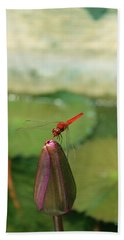 Red Dragonfly At Lady Buddha Hand Towel