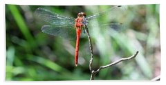 Bath Towel featuring the photograph Red Dragonfly by Karen Silvestri