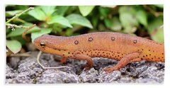 Red Eft - Close Up Hand Towel by Kerri Farley