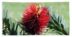 Callistemon - Bottle Brush 7 Hand Towel