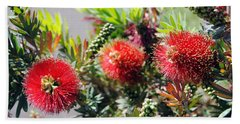Callistemon - Bottle Brush 6 Hand Towel