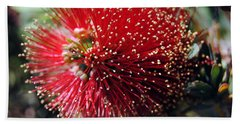 Callistemon - Bottle Brush 5 Hand Towel