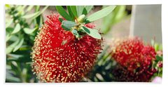 Callistemon - Bottle Brush 4 Hand Towel
