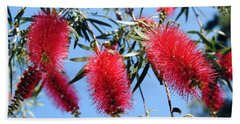 Callistemon - Bottle Brush 3 Hand Towel
