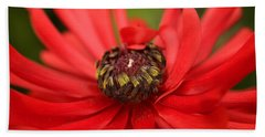 Red Flower Hand Towel by Ralph A  Ledergerber-Photography
