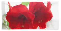 Hand Towel featuring the photograph Amaryllis by Rebecca Harman