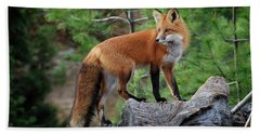 Red Fox 4 Hand Towel by Gary Hall