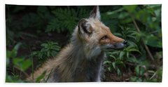 Red Fox In The Forest Hand Towel