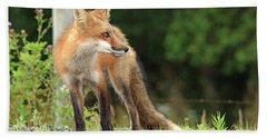 Red Fox In The Rain Bath Towel