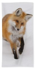 Red Fox Portrait Bath Towel
