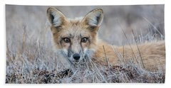 Red Fox - San Juan Islands Bath Towel