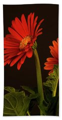 Red Gerbera Daisy 1 Hand Towel by Richard Rizzo