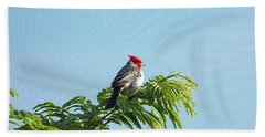 Red-headed Cardinal On A Branch Bath Towel