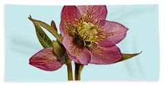 Hand Towel featuring the photograph Red Hellebore Blue Background by Paul Gulliver
