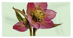 Bath Towel featuring the photograph Red Hellebore Green Background by Paul Gulliver