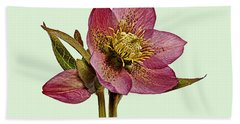 Hand Towel featuring the photograph Red Hellebore Green Background by Paul Gulliver