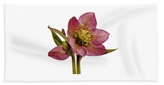 Red Hellebore Transparent Background Bath Towel by Paul Gulliver
