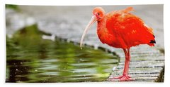 Hand Towel featuring the photograph Red Ibis by Alexey Stiop