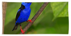 Red-legged Honeycreeper Bath Towel by Tony Beck