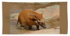 Red River Hog  Hand Towel