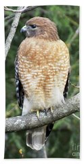 Red Shouldered Hawk 12 Hand Towel