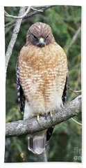 Red Shouldered Hawk 13 Hand Towel
