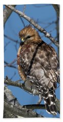 Hand Towel featuring the photograph Red Shouldered Hawk 2017 by Bill Wakeley
