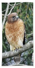 Red  Shouldered Hawk Nov 2 Hand Towel