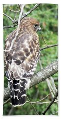 Red Shouldered Hawk  November 1 Bath Towel