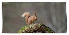 Red Squirrel Eating A Hazelnut Bath Towel