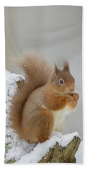 Red Squirrel In The Snow Side On Bath Towel