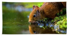 Red Squirrel Bath Towel