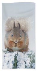 Red Squirrel Nibbles A Nut In The Snow Bath Towel