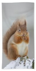 Red Squirrel Nibbling A Hazelnut In The Snow Hand Towel
