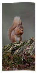 Red Squirrel Nibbling A Nut Bath Towel