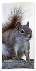 Red Squirrel On Rock 1 Bath Towel by Doris Potter