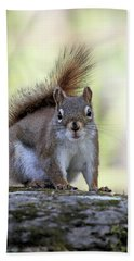 Red Squirrel On Rock Hand Towel by Doris Potter