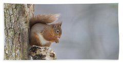 Red Squirrel On Tree Fungus Hand Towel