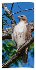Red-tail Hawk 6813 Hand Towel