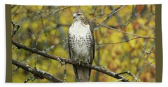 Red Tail Hawk 9887 Bath Towel