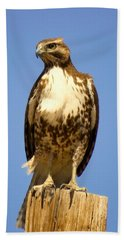 Red-tailed Hawk On Post Hand Towel