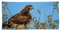 Red-tailed Hawk  Bath Towel