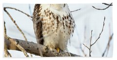 Red-tailed Hawk With Full Crop Bath Towel
