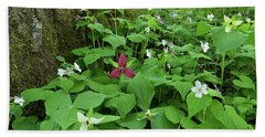Red Trillium At Center Bath Towel by Alan Lenk