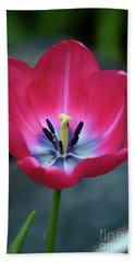 Red Tulip Blossom With Stamen And Petals And Pistil Bath Towel