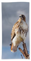 Redtail Portrait Hand Towel by Bill Wakeley