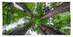 Redwood Tree Hand Towel by Henri Irizarri